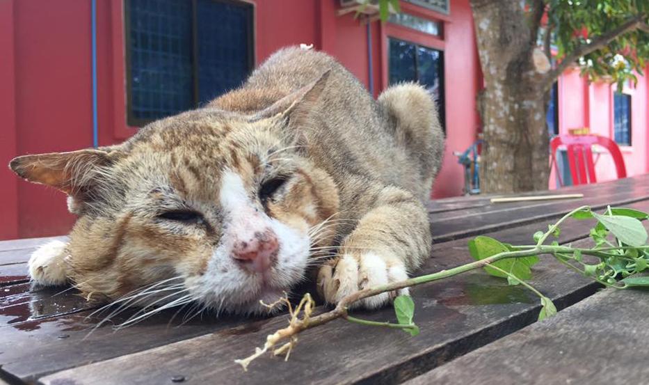 cat 01 (1)
