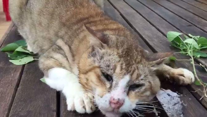 cat 01 (5)