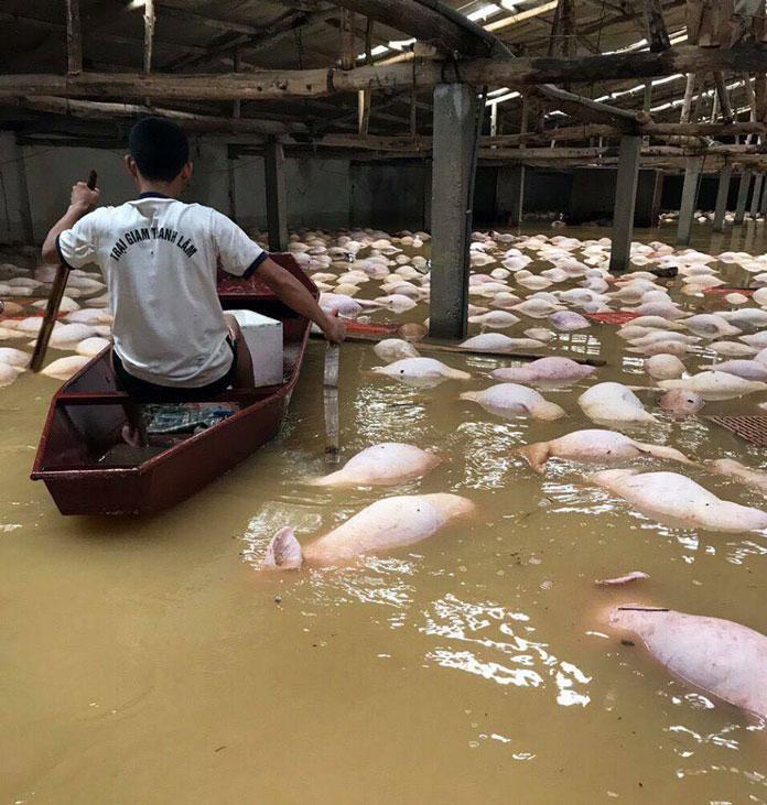 Pig Dies (11)