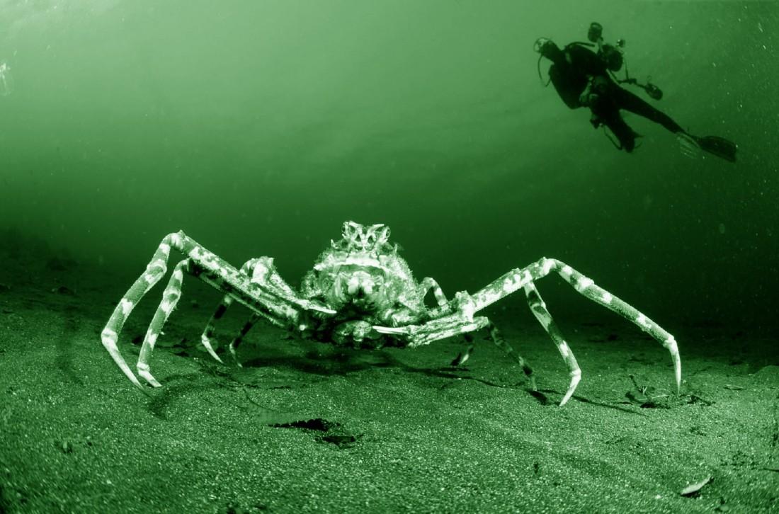 crab1_large