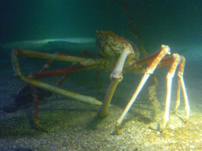 crab2_large