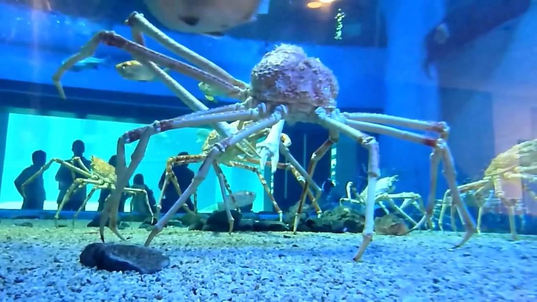 crab4_large