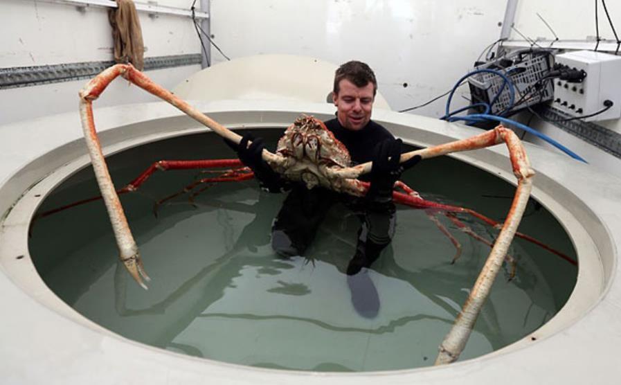 crab_large