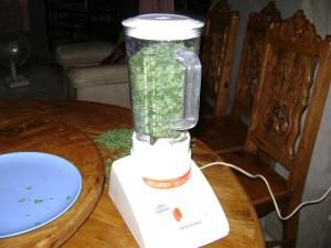 Blended moringa